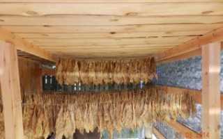 Табак как выращивать и сушить в домашних условиях