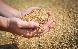 Какие зерновые культуры выращивают в ставропольском крае?