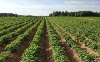 Картофель как выращивать удобрять бороться с сорняками