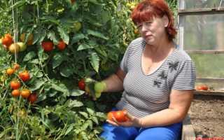 Кистевые томаты лучшие сорта