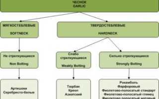 Как выращивать чеснок в больших масштабах в башкирии?