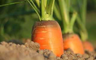 Какие овощи выращивают в россии в промышленных масштабах?