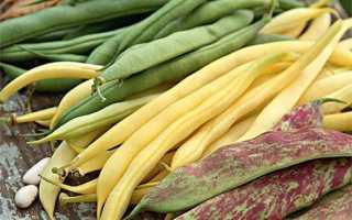 Как выращивать кустовую фасоль в открытом грунте?
