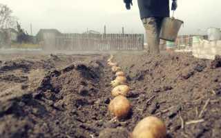 Где выращивают картофель в ленинградской области