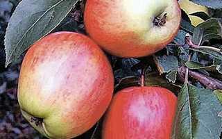 Хорошие сорта яблонь