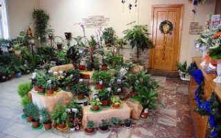 Как выращивать цветы в домашних условиях?