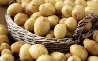 Лучший сорт ранний картофель