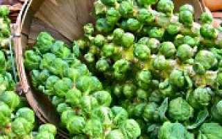 Лучшие сорта брюссельской капусты