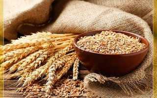 Лучшие сорта пшеницы озимой