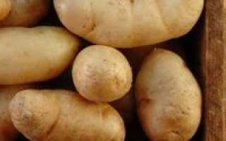 Картофель хороший сорт