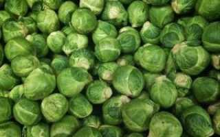 Как выращивать брюссельскую капусту в домашних условиях?