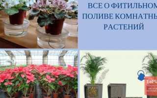 Какие растения можно выращивать на фитильном поливе?