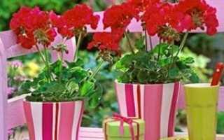 Какие цветы нужно выращивать в квартире их значение?