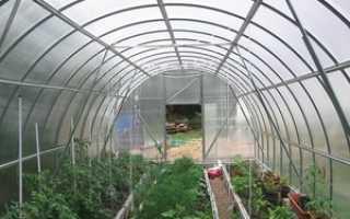 Что можно выращивать зимой в теплице без отопления?