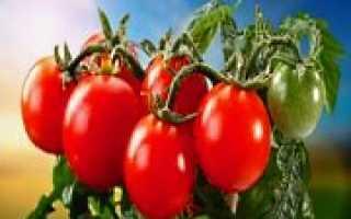 Лучшие отечественные сорта томатов
