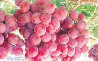Лучшие крупноплодные сорта винограда
