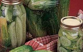 Лучшие сорта засолочных огурцов