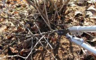 Как правильно выращивать крыжовник в открытом грунте?