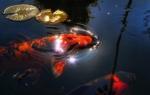 Какую рыбу можно выращивать в пруду своими руками?