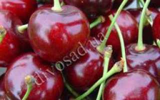 Лучшие сорта красной черешни