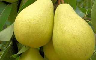 Как правильно выращивать саженцы груши сорт лада?