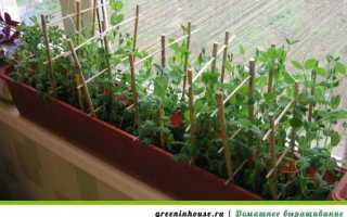 Выращивать горох в домашних условиях