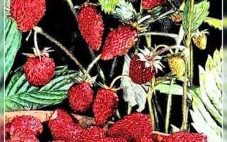 Можно ли выращивать землянику в домашних условиях?