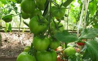 Где когда и как выращивают рассаду для весенних теплиц