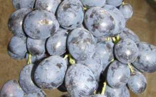 Лучшие поздние сорта винограда
