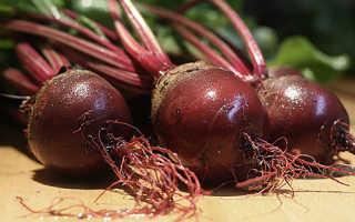 Как выращивать свеклу в открытом грунте из семян?
