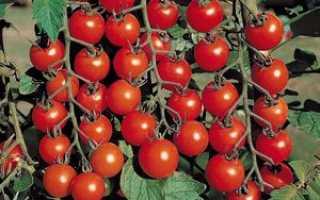 Лучшие сорта помидор черри