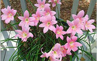 Цветы которые можно выращивать на северной стороне