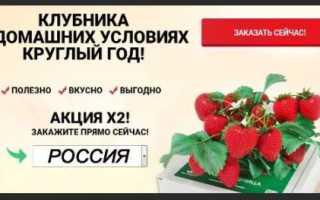 Можно ли выращивать клубнику в квартире круглый год?