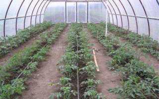 Как выращивать помидоры в теплицах из поликарбоната?