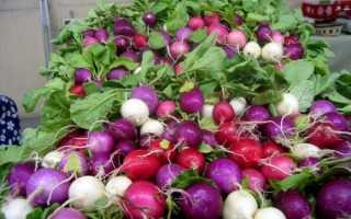 Редис семена лучшие сорта