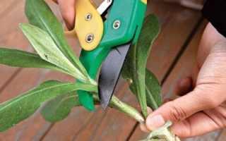 Как в домашних условиях выращивать герберы?