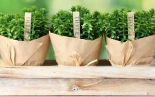 Какие овощи можно выращивать в домашних условиях?