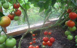 Лучшее от октябрины ганичкиной выращиваем томаты