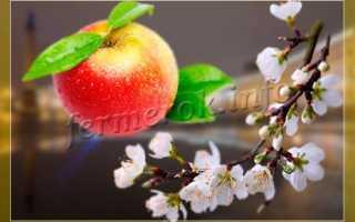 Яблоня лучшие сорта