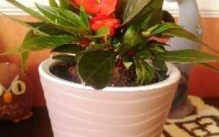 Выращиваем цветы в домашних условиях