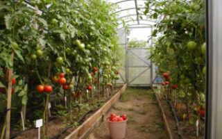 Лучшие сорта лиановидных томатов