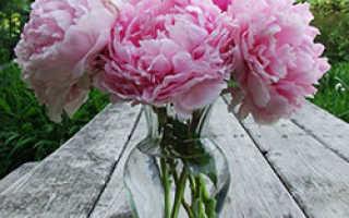 Как правильно выращивать пионы чтобы они цвели круглый год?
