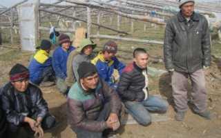 Китайцы выращивают овощи в волгоградской области