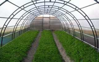 Как выращивать зелень в теплице из поликарбоната?