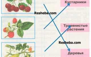 В жарких странах выращивают много замечательных фруктов