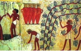 Какие сельскохозяйственные культуры выращивают в египте?