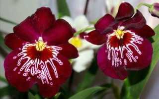 В каком грунте лучше выращивать орхидеи в домашних условиях