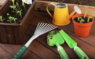 Что выращивают на подоконнике зимой для начинающих?