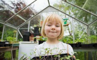 Как выращивать огурцы и помидоры в теплице из поликарбоната?