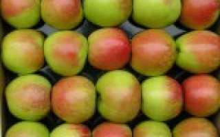 Лучшие поздние сорта яблок
